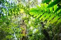 Canopy of tropical Amazon rain forest Royalty Free Stock Photo