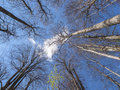 Canopy view of a secular european beech forest fagus sylvatica in semenic mountains Stock Photo
