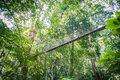 Canopy walk through the rainforest at national park malaysia Royalty Free Stock Images