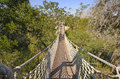 Canopy Walk in a Subtropical Forest Royalty Free Stock Photo