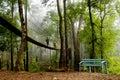 The Canopy Walk Way Stock Photo