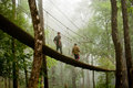 The Canopy Walk Way Royalty Free Stock Photography