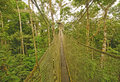 Canopy walkway in the rain forest amazon Royalty Free Stock Images