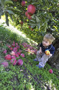 Cant eat just one little boy surrounded by apples in a fruit orchard under an apple tree picture of opportunity Royalty Free Stock Images