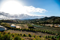 Canyon orchards in the hills outside oceanside ca Royalty Free Stock Images