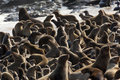 Cape Fur Seal Colony in Namibia Royalty Free Stock Images