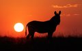 Cape mountain zebra equus zebra silhouetted against red sunrise south africa Stock Images