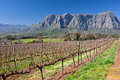 Cape wineland Royalty Free Stock Photos