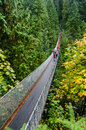 Capilano suspension bridge in a raining autumn day Royalty Free Stock Photos