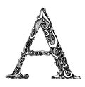 Capital Letter A - Calligraphic Vintage Swirly Royalty Free Stock Photo