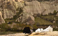 Cappadocia environment landscape in turkey and pigeon in the front Royalty Free Stock Photos