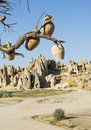 Cappadocia jugs on a tree with landscape in background turkey Stock Photos
