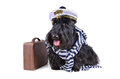 Captain dog Stock Photography