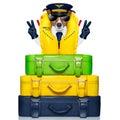 Captain dog Royalty Free Stock Photo