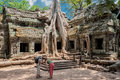 Capturing the giant roots of ta prohm siem reap cambodia – march tourists taking photos at built in th century was later Royalty Free Stock Photo