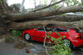 Car Crushed by Tree Royalty Free Stock Photo