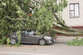 Car destroyed by a fallen tree. Royalty Free Stock Photo