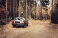 Car in the forest gry coniferous Royalty Free Stock Photos