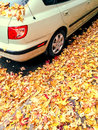 Car and golden maple leaves Royalty Free Stock Photo