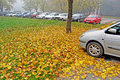 Car parking in the autumn lot with cars and fog and leaves country Stock Images