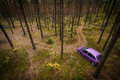 Car in the pine forest purple Stock Image