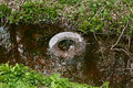 stock image of  Car tire in a creek