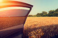 Car in wheat field with opened door and blurred trees on background Royalty Free Stock Image