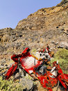 Car wreckage on cliffs of famara on the island lanzarote canary islands spain Royalty Free Stock Images