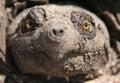 Cara de la tortuga de rotura Foto de archivo