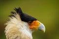 Caracara Bird Face Stock Images