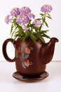 Carafe with Flower Stock Images
