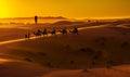 Caravan camel going through the sand dunes in the sahara desert morocco Royalty Free Stock Photography