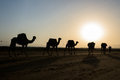 Caravan of camels with salt in danakil depression desert Royalty Free Stock Photos