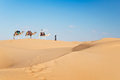 Caravan of camels in the Sand dunes desert of Sahara Royalty Free Stock Photo