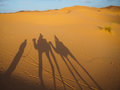 Caravan of camels with shadows in the Sahara desert Royalty Free Stock Photo
