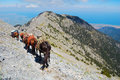 A caravan at mount olympus supply of horses descents through the steep screes of midday Royalty Free Stock Photography