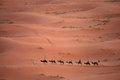 Caravan in sahara desert morocco Stock Photography