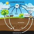 Carbon cycle vector illustration. Labeled CO2 biogeochemical process scheme Royalty Free Stock Photo