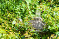 Carboy with wickerwork in a bedding between shrubs Stock Images