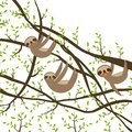 Card banner template with funny and cute smiling Three-toed sloth set on green branch tree creeper, copy space white back