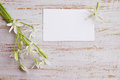Card and bouquet greeting a of white lilies Royalty Free Stock Photography