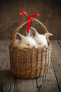 Card with Couple White Rabbits in the Basket Royalty Free Stock Photos