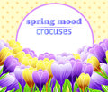 Card with crocuses. Spring flower. Perfect for wedding, greeting or invitation design. Vector