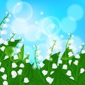Card with field of lily of the valley flowers vector spring background on shining light sky blue bokeh illustration for mother s Stock Image