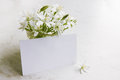 Card with flowers white delicate spring on white board Royalty Free Stock Photos