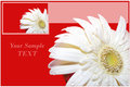 Card with herber flower. Royalty Free Stock Image
