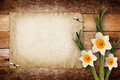 Card for invitation with bouquet of flowers narcissus Stock Photography
