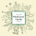 Card of a medicinal herbs and flowers.