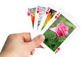 Card showing rose in summer hand holding playing Stock Photography