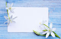 Card and white lilies greeting a bouquet of Stock Images